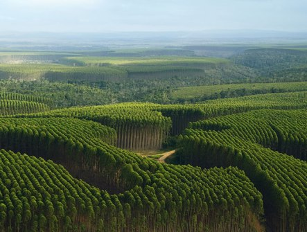 En Brasil se decreto el 21 de septiembre día internacional de lucha contra el monocultivo de árboles.