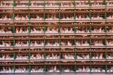 En la granja Mantiqueira, en Brasil, ocho millones de gallinas ponen 5,4 millones de huevos al día. Unas cintas transportadoras llevan los huevos directamente a la planta envasadora. La demanda de carne se ha triplicado en los países en vías de desarrollo en las últimas cuatro décadas y el consumo de huevos se ha multiplicado por siete, lo que ha impulsado una gran expansión de las instalaciones de producción animal a gran escala.